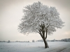 Sumopix, Vinter