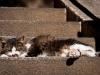 A lazy cat enjoying the sun in Kamakura