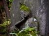 Statue in the Nezu Museum Garden
